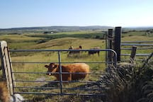 Some of the neighbours