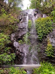 Nimbin Waterfall Retreat - Nimbin - Flat