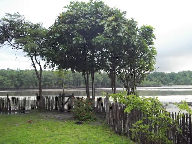 The corner of the front garden