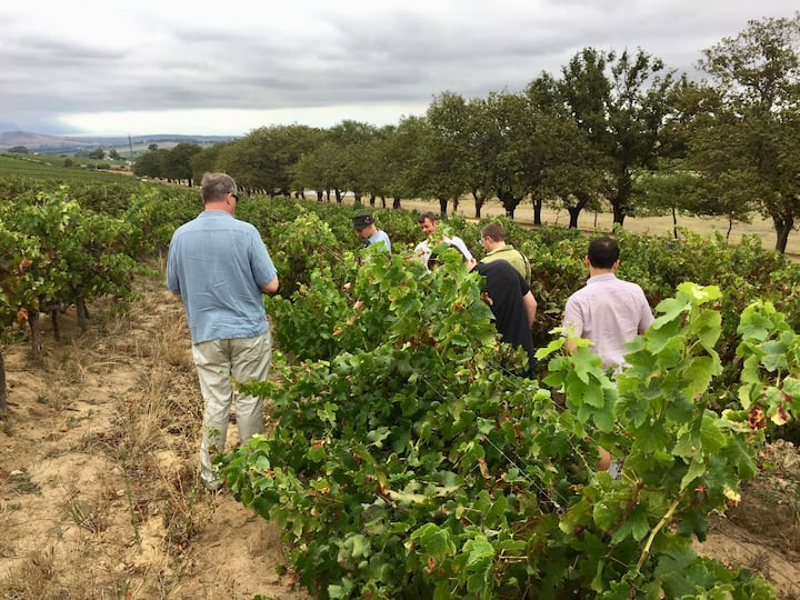 Educational vineyard walk