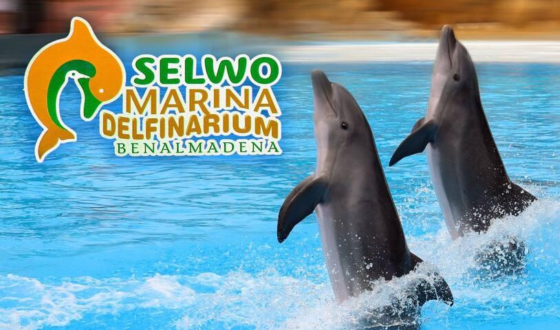 selwo Marina a 5 minutos