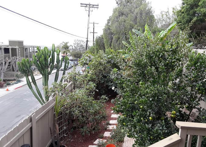 Yard with fruit trees and butterflies