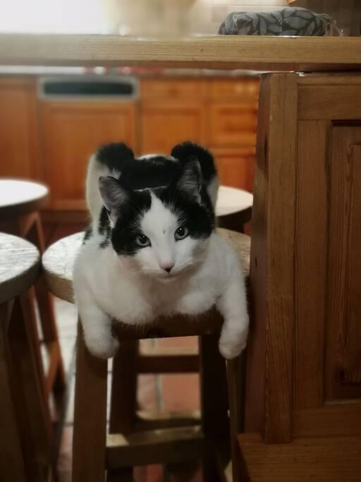 Unsere Katze Chichu (: