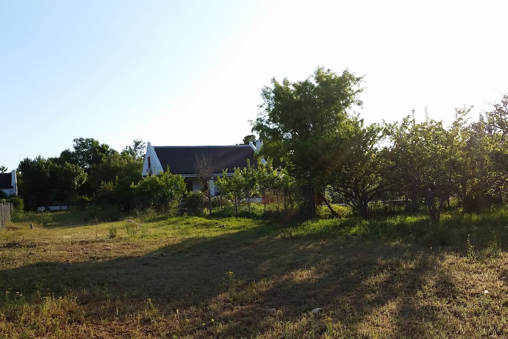 Our cottage is set amongst 20 apricot trees, providing lovely shade in summer