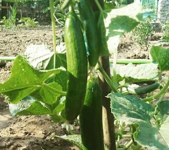 Taşev , organik bahçe ve huzur cafe - Fethiye