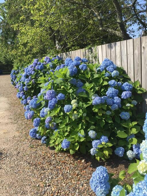 Flowers bordering driveway