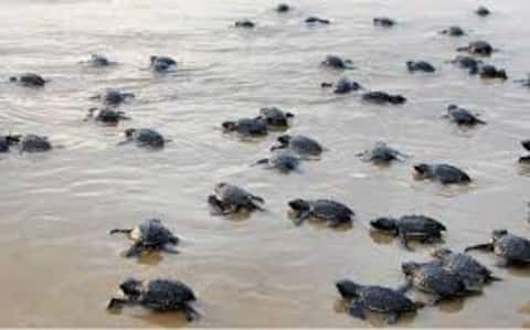 Velas - The Turtle Breeding Village 6