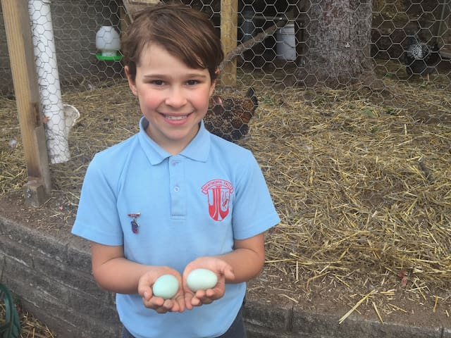 Big and little kids love collecting their own fresh eggs each day
