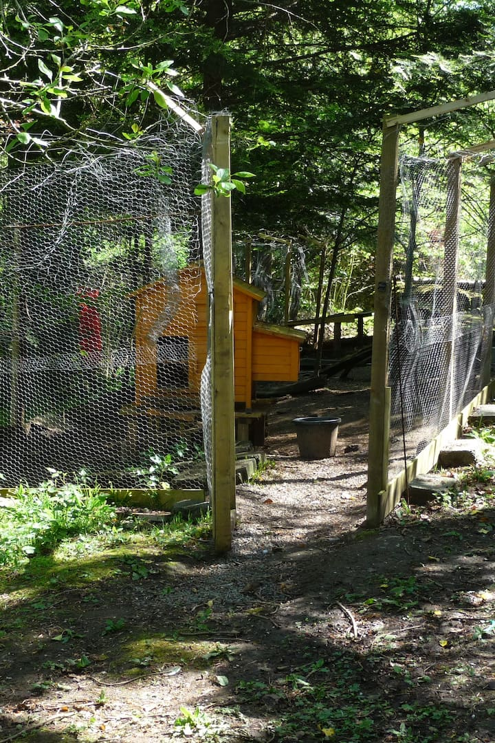 Our inner enclosure and chicken coop