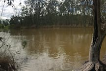 The Mighty Murray at the end of the road. The river runs high and fast in this part of the bush, making it picturesque and perfect for floating and boating.