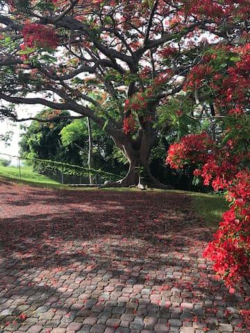 BEDROOM UNDER THE FLAMBOYAN TREE