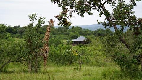 "Dombeya Game Reserves fantastiska ""Shonalanga Lodge"""