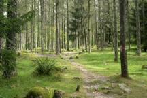 Sentiero fra i boschi
