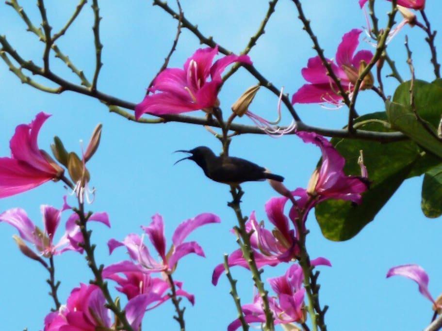 家门口的太阳鸟在唱歌……^_^