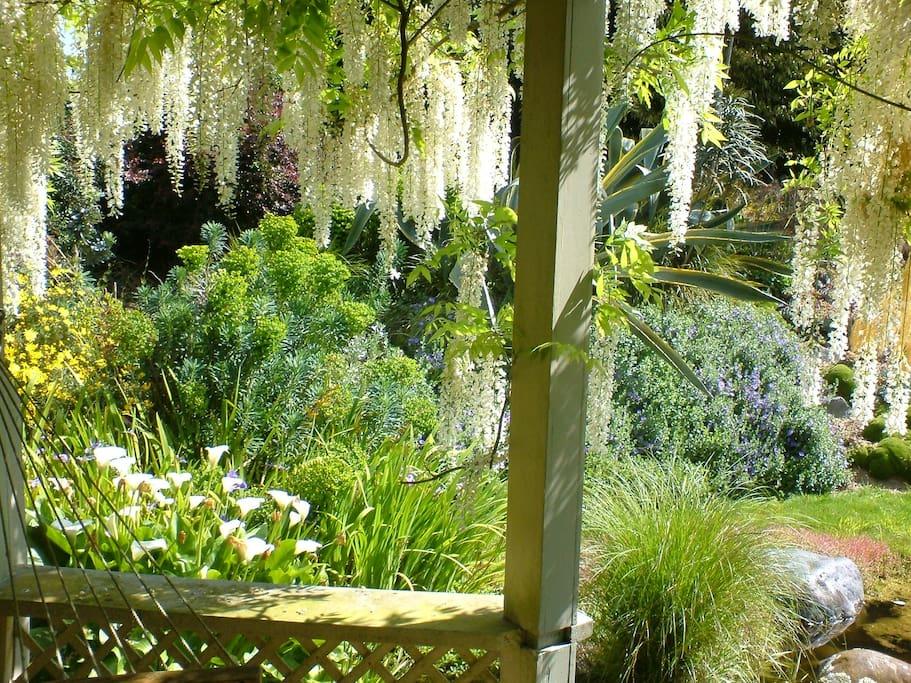 Swing in the gazebo hammock next to the pond