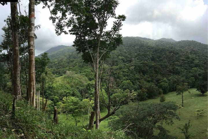 """View on Portobelo park and """"cerro brujo"""" the wizard's peak - usually hidden by clouds."""