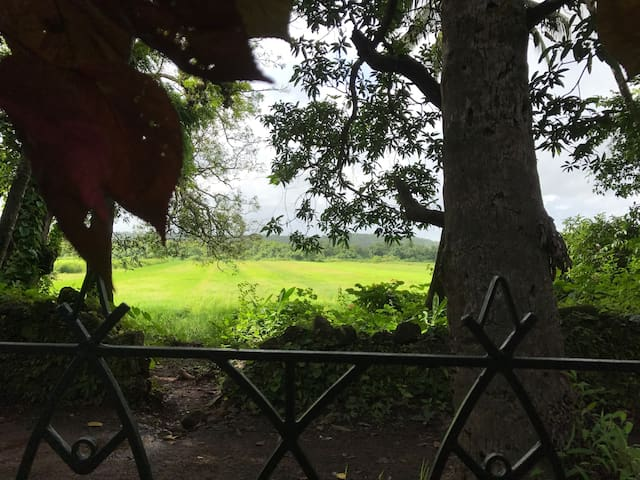 Monsoon view of the rice fields from the verandah