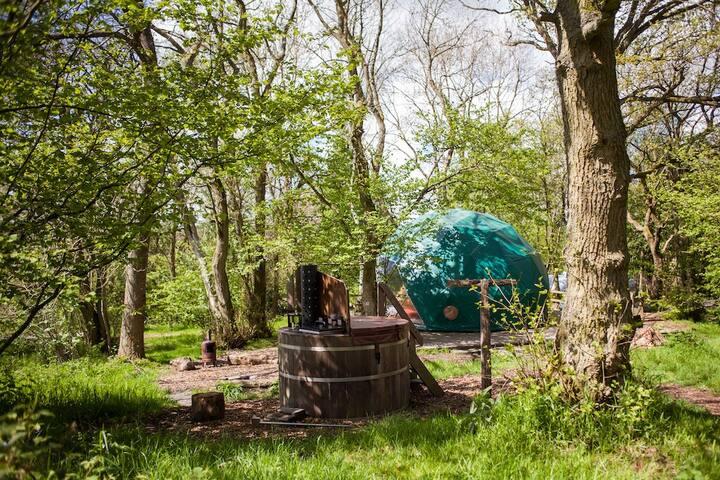 Oak Dome