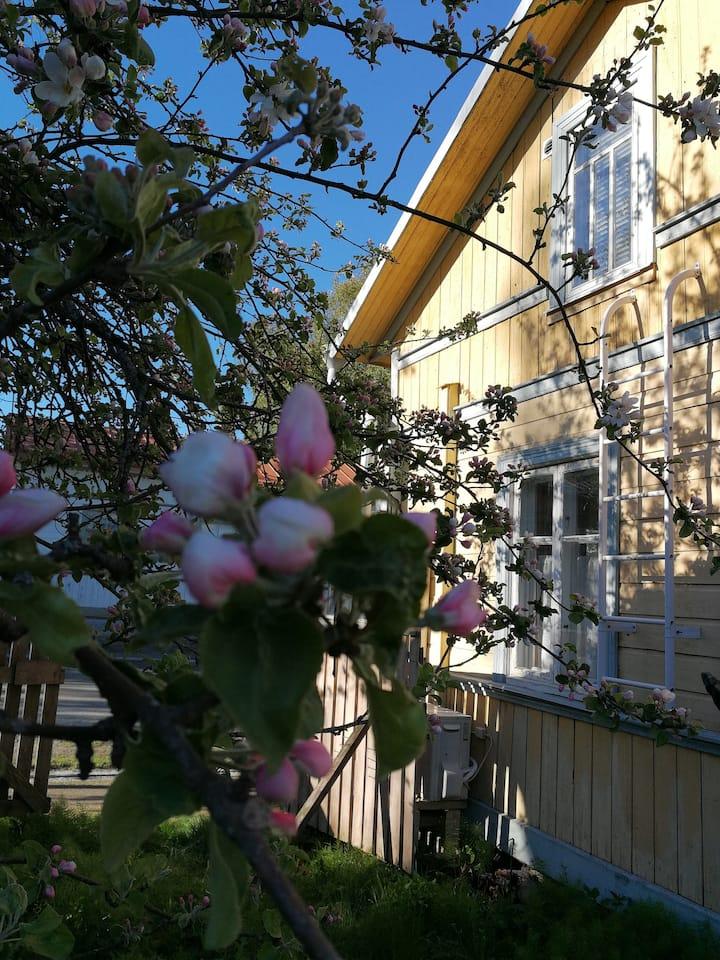 Kirkkokadun Olga, cozy, like cottage