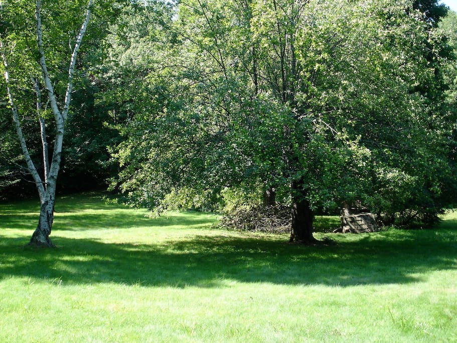view of back area, mature apple trees.
