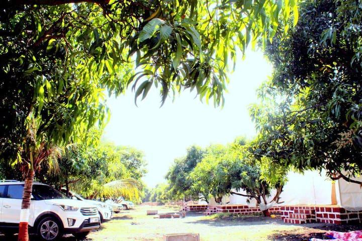 jungle club resort sasan-gir