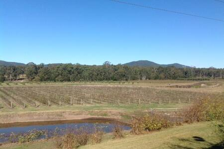 Vineyard and Olive Grove - Richmond Vale