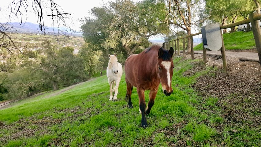 Ballard Hill Ranch Los Olivos wine country horses