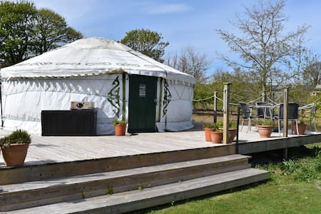 Yurt Mongolian Yurt Penzance. In quiet 2 acre wood
