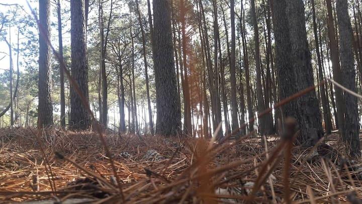 Jaureguiberry, casa en el bosque