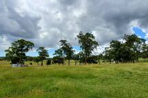 Pakenham Ranges