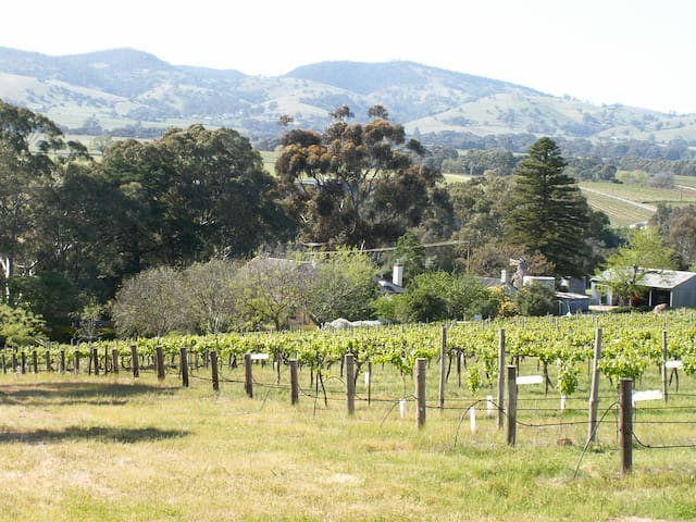 Archery Road Estate - vineyards with great views