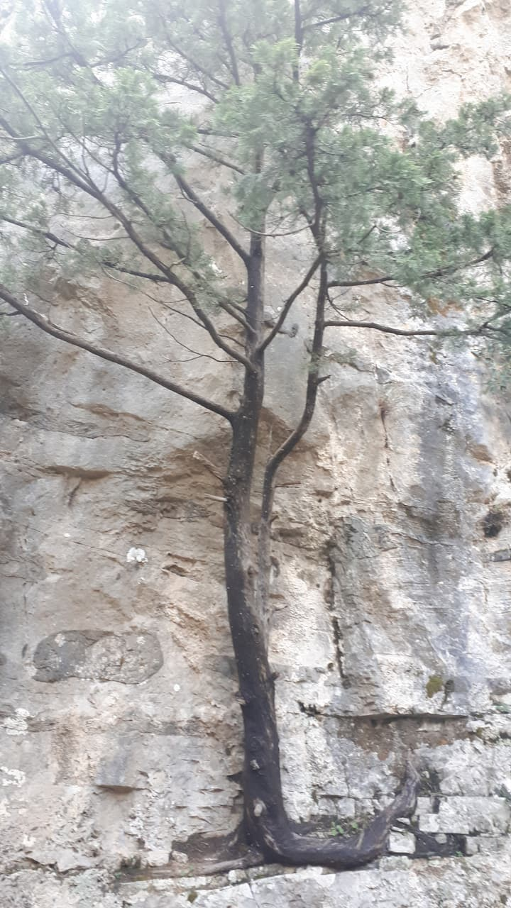 Tree growing on the rock