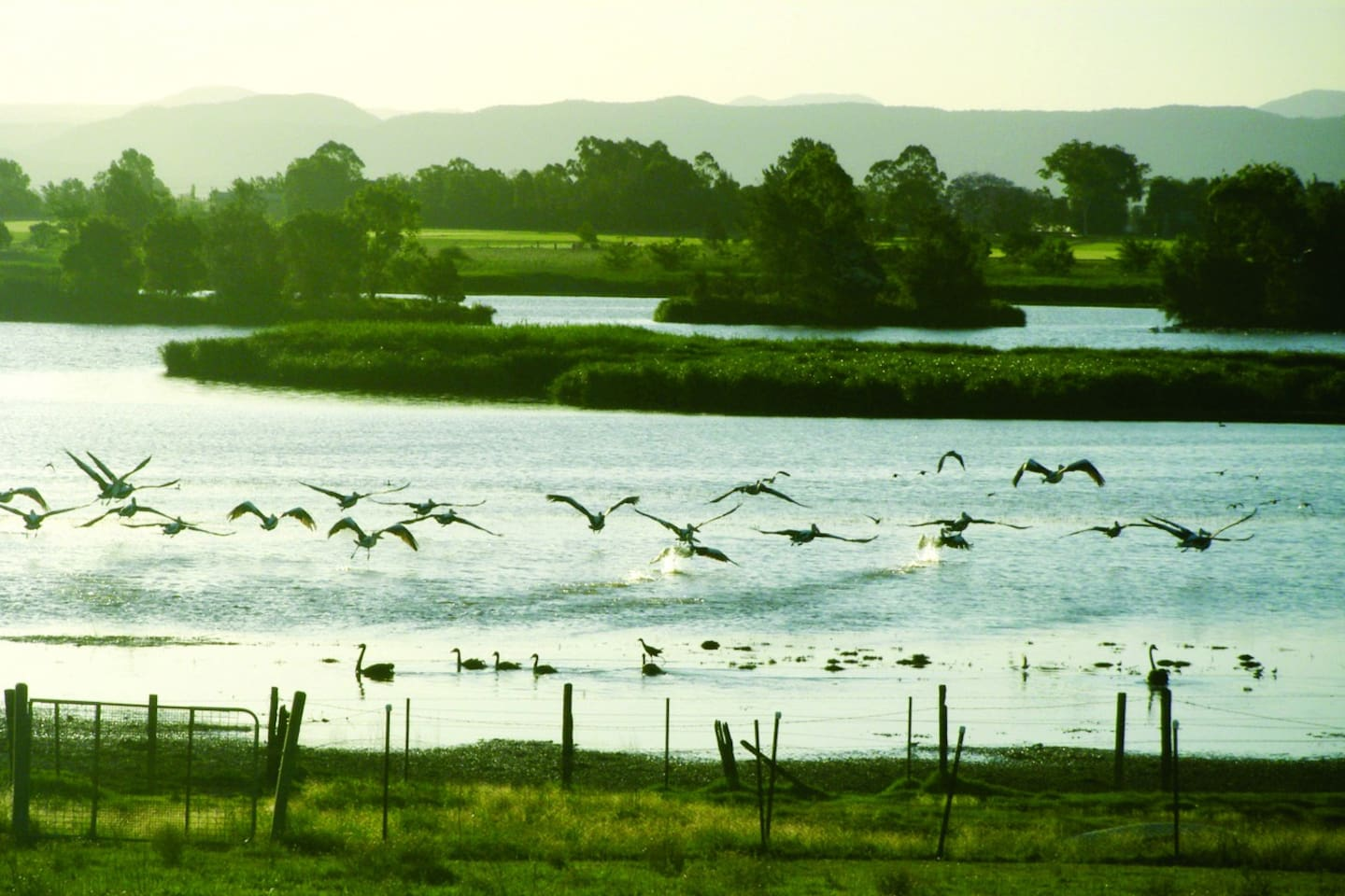 View of the lagoon from the paddocks. Stroll down to the lake and watch the birdlife.