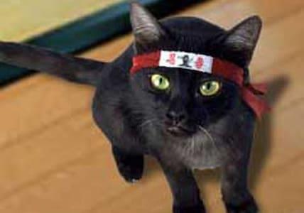 Ninja Cat @FAKE LISTING@ @TEST@ - Jordan Valley