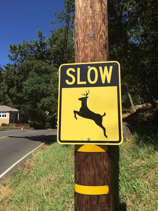 Sign near house.  Lots of wildlife in this rustic neighborhood.