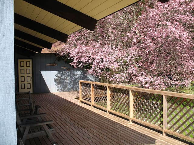 A flowering north-east exposure on the entry deck.