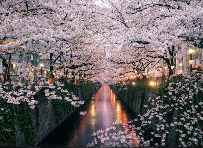 3/10New open!Sakura studio❤Meguro riverside - Shinagawa-ku - Lägenhet