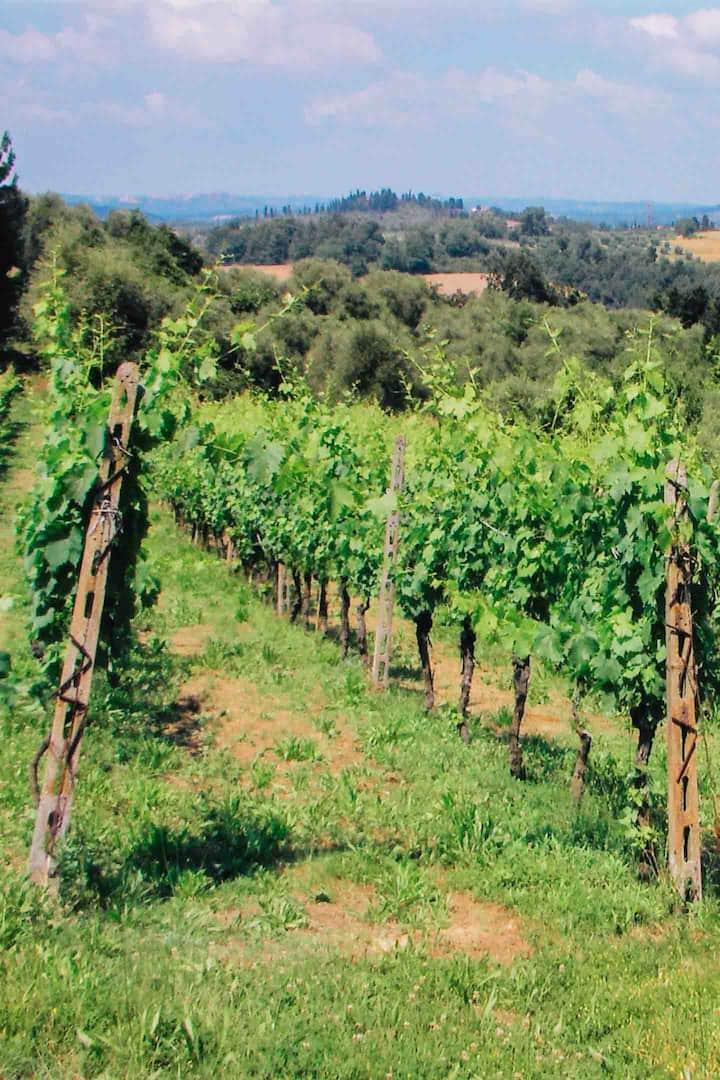The vineyard in spring