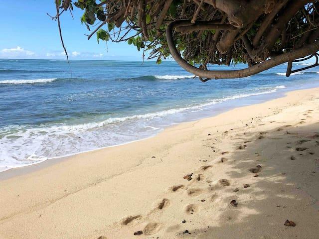 Ohana House Steps Away from a Private Beach