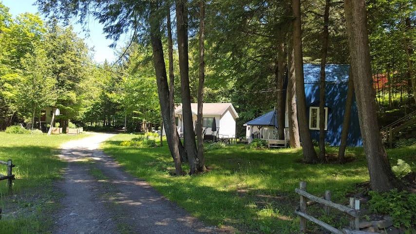 Site enchanteur avec chalets et piscine en forêt