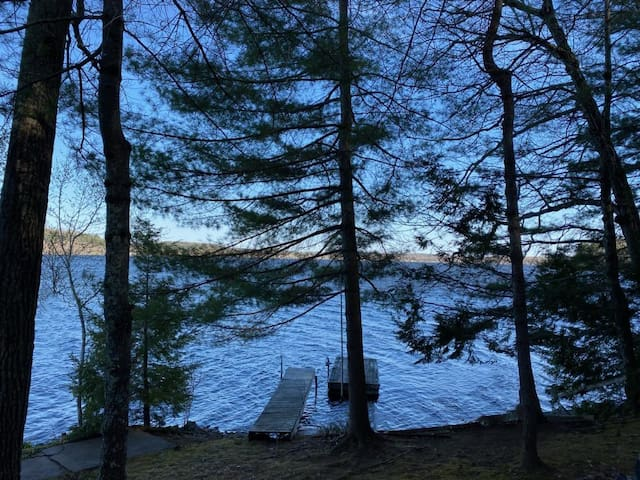 White Pine and Water