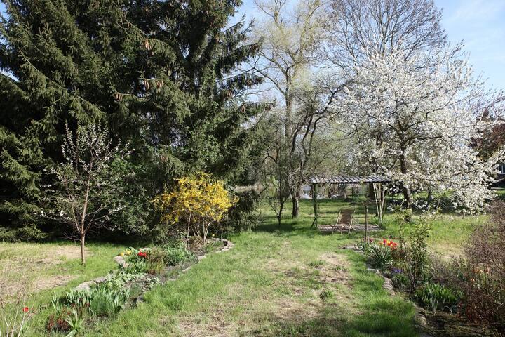 o jardim na primavera