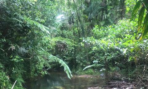 Ametista Eco Cottage nella foresta pluviale di Daintree