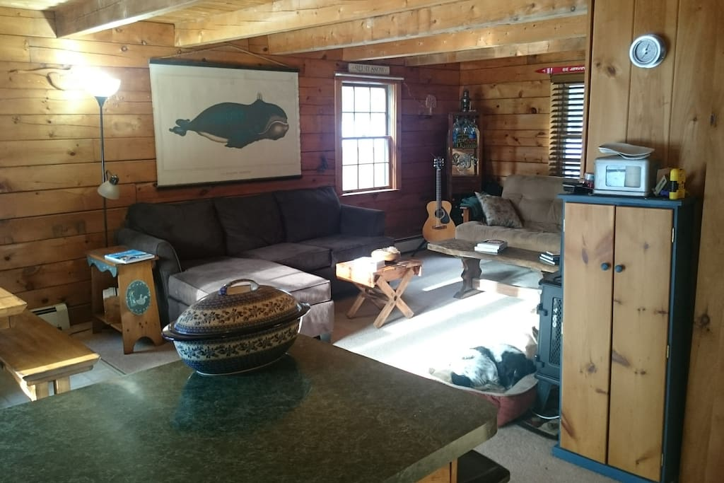 Open concept living space, dog friendly
