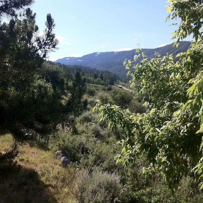 View up Fox Creek Canyon from the deck