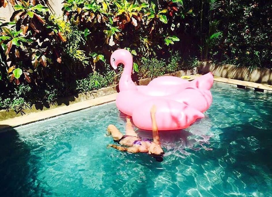 A pink flamingo used to live here