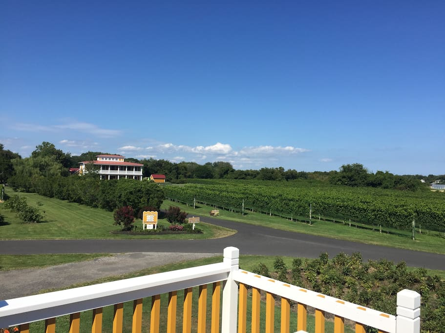 Stunning view of vineyard and Villa from Stable deck
