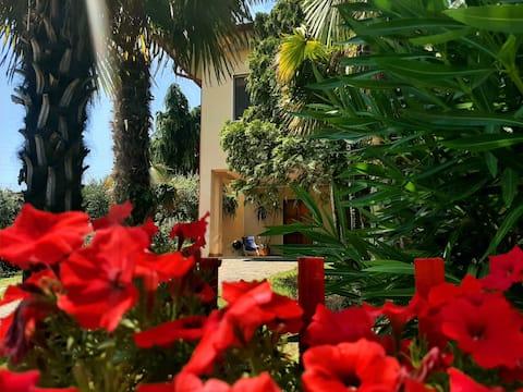 Olivenville med stor have