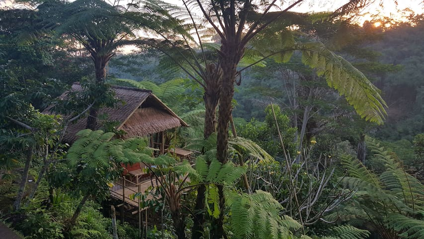 Bamboo House & Incredible Forest Views - Good Wifi