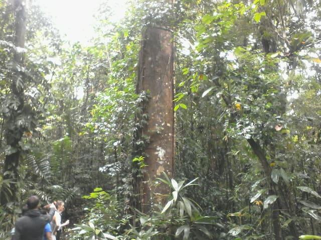 En medio de la selva.